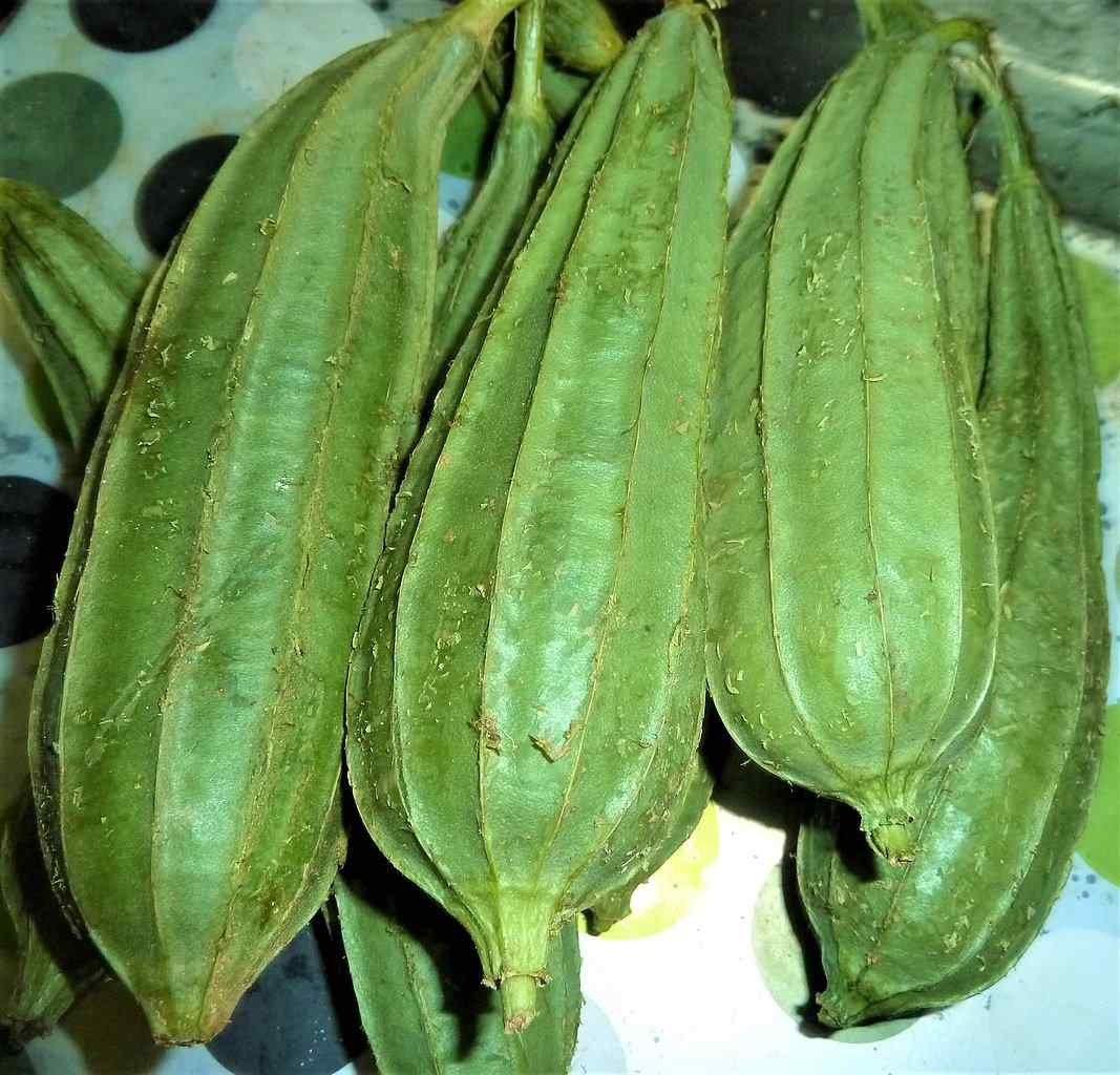 Ridge Gourd - Health Benefits and Nutritional Facts